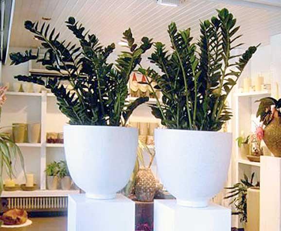 stunning pflanzen f r innen pictures thehammondreport. Black Bedroom Furniture Sets. Home Design Ideas